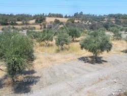 for Sale Plot 35.000€ Salakos (code Β-1372)
